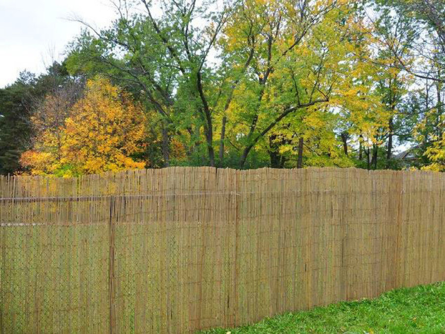 Bamboo Toronto Bamboo Fencing And Poles Reed Willow