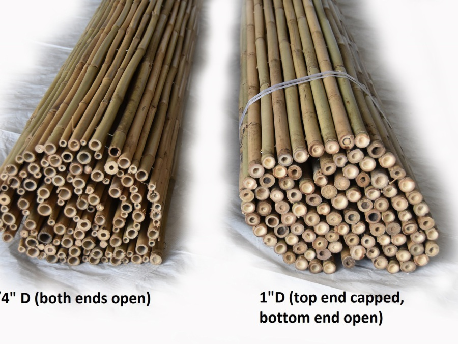 Buy Bamboo Fencing Poles Tropical Landscaping Bamboo